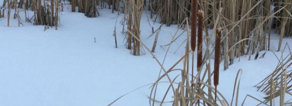 Winter0109.jpg