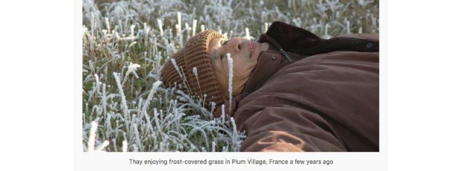 Thay Frost Grass.jpg