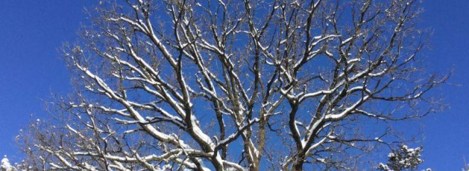 Winter0231.jpg