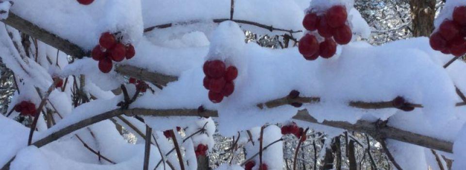 Winter0273.jpg